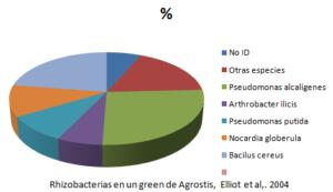 rhizobacterias