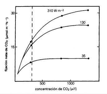 Relación entre la fijación y la concentración de CO2 con la variable de la intensidad lumínica luz