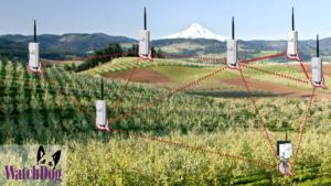Red de sensores Enterrados WacthDog de Spectrum