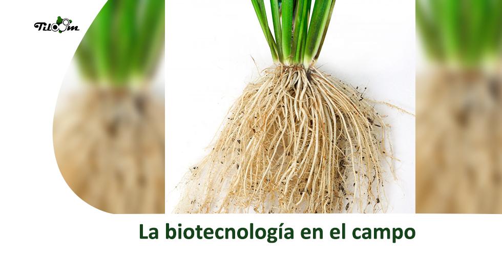 La biotecnología en el campo